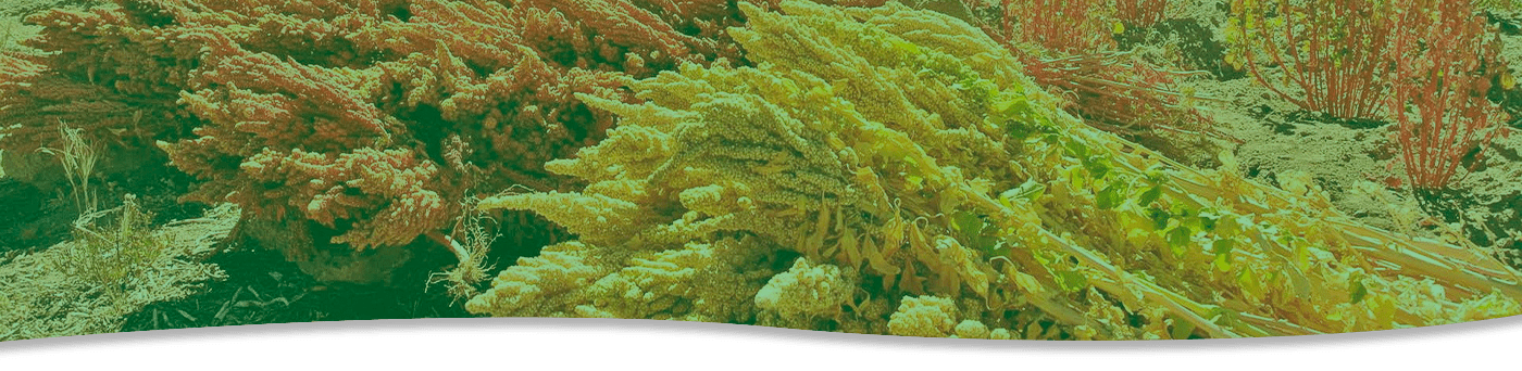 https://www.corpalen.com/wp-content/uploads/2020/08/banner-superfood.png